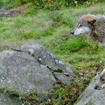 Gites Limousin Loups de Chabrieres